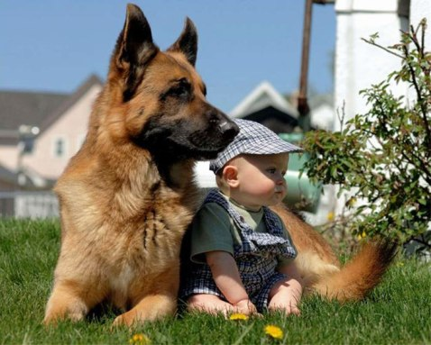 dog guarding infant